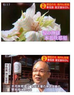 即位の礼 静岡浅間神社で桜開花.JPG